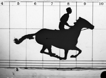 A photo taken by Muybridge of a horse with all four legs off the ground.