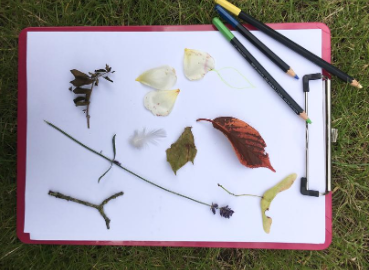 Sticks, leaves and petals placed alongside some colouring pencils.